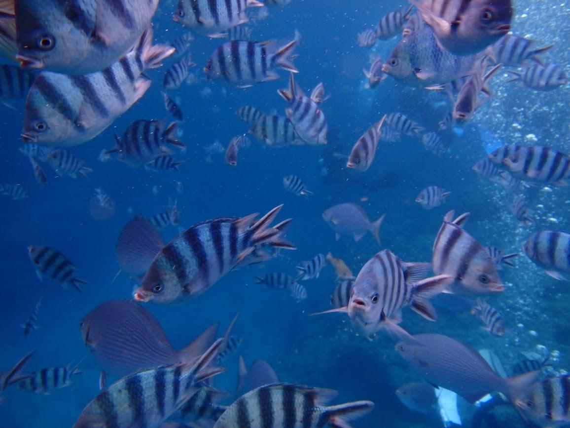 沖縄の青の洞窟には色鮮やかな魚がいっぱい