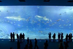 美ら海水族館の攻略法