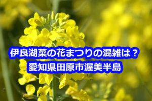伊良湖菜の花まつりの混雑状況と田原市の渋滞は?