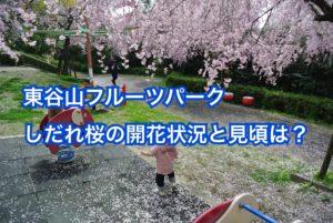 東谷山フルーツパークの桜の見頃と開花状況は?