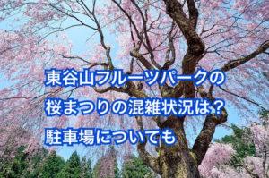 東谷山フルーツパークの桜祭りの混雑状況は?